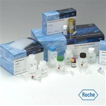 猪B-细胞淋巴瘤因子2(Bcl2)ELISA试剂盒