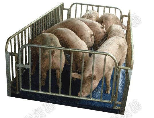 卖生猪用的牲畜秤