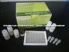 人前动力蛋白受体1(PKR1)ELISA试剂盒